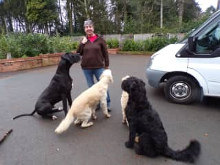 With the 4 big dogs in Solihull