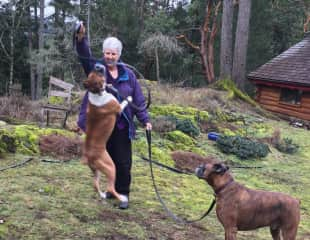 Ripley jumps in Victoria Highlands