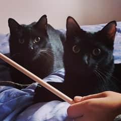 Ash(right) Bruce