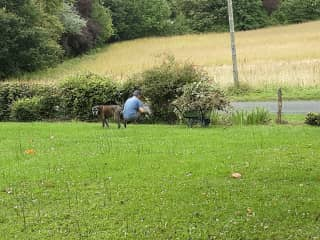 Our latest boxer Lana helping Jan with gardening.