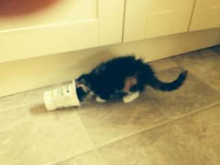 My cat Arabella when she was just a kitten!