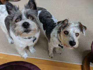 Jessie and Sammy, Powhatan, VA