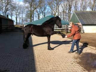 Karen teaching her horse Wouter high five