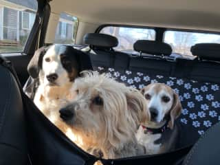 Ben, Toby and Charley about town