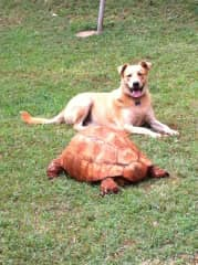 Our African dog and leopard tortoise (2015)