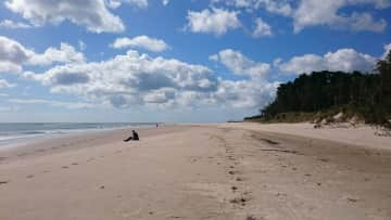 Curracloe and the Raven Nature Reserve