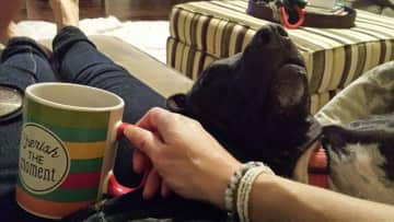 My adorable foster dog Nova conked out on the sofa with me. I love these moments & my cup was so appropriate!