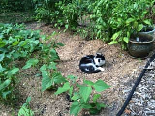 T loves to snooze in the garden