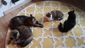 4 of our 6 cats