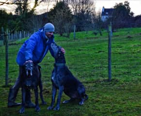 Adam with Lola & Frejya, 300 pounds of Great Dane :)