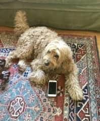 A very high-tech doggie