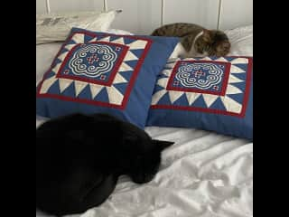 Whitey, the black cat and Steve the striped one