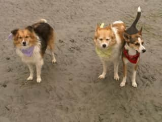 My 3 girrrlz when we lived on Texada island Punkin Chue and Layla. The mom of the two is in the middle