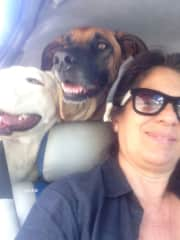 Bianca & Kira, Carly's dogs in Venezuela, can not see us leave, they immediately invite themselves