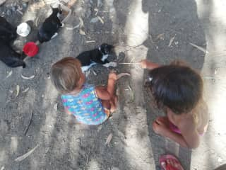 Our children with our friend`s cats