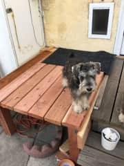 doggie door to house