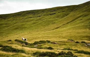 Wild pony in Wales