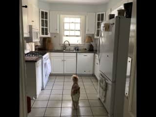 Kitchen with cat, gas stove, light and airy.