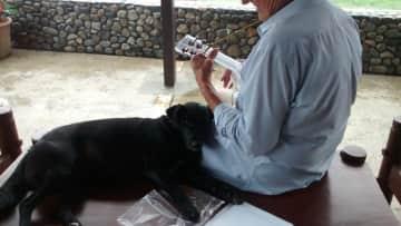 Personal Pooch musician!