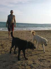 Chris at the beach with Chief and Captain