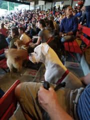 Susan's other son's dog Bruce at a ballgame