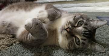 Finn - Yoga Cat!