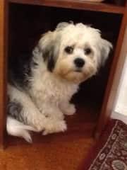 Sherlock hiding in the bookcase
