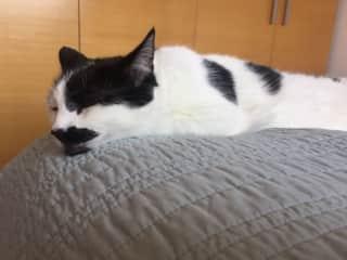 Sleepy Barney