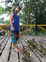In our tour of South America 2019 we float for 31 days the entire route of the Amazon, from its origin Peru to the Atlantic Ocean.  At the triple border we went to the island of the monkeys in Leticia.