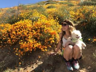 Peanut and I enjoying the super bloom