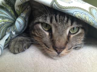 Bob...my last fur baby.