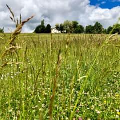 My fields