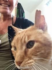 Cat/housesitting in Oxford