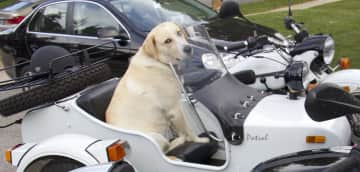ZOE, wanting ride on the motorcycle