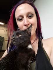 Volunteering at the cat shelter