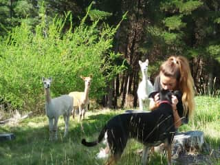 Lola and Dora with the alpacas
