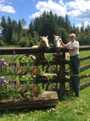 Jack with our riding horses, Bo and Esio