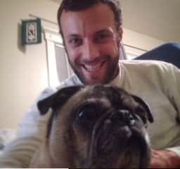 Ben pet-sitting Frawnk the pug