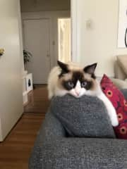 kimi chillin on his chair