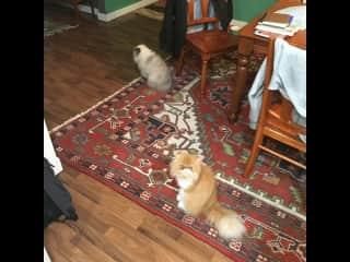 Lovely kitties, George and Bernie, in Portland, Oregon.
