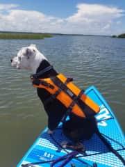 Millie paddleboarding.