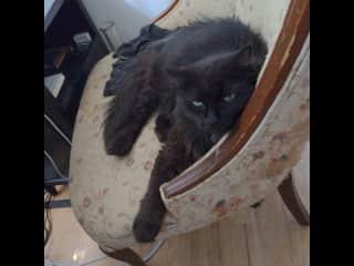 Ellie, the black cat who steals Ada's food.