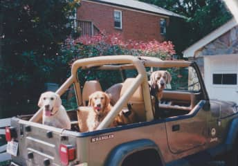 Tess, Stella and Groover going for a drive to the beach
