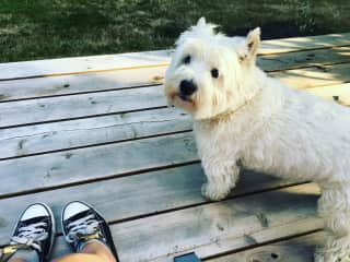 Finnie & I hanging out on the deck North Saanich BC