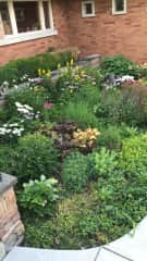 This is one of the gardens I have pulled weeds out of, put new plants in, and trimmed different plants as they kept growing. Mother Nature is amazing. I will enjoy taking care of your plants.