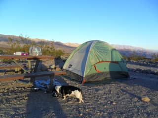 Camping with the dogs