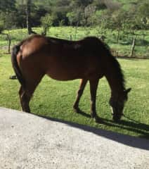 Horses were adopted when owner moved away.   Porsche is 28 or so.  Not ridden.  Neighbor will feed or share duties.