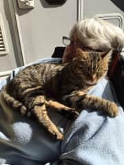 A campsite cat who befriended us in Burgos, Spain in 2016