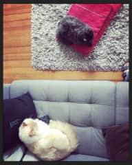 Nuri and Kiki