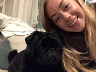 Nina's bonusdog Bobbo the pug.